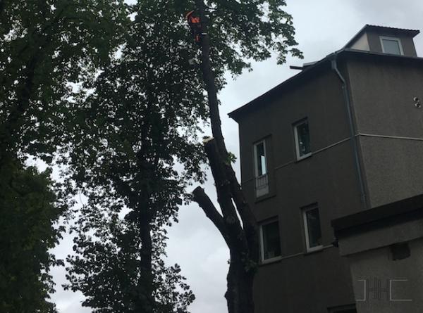 Ohtlike-puude-langetamine