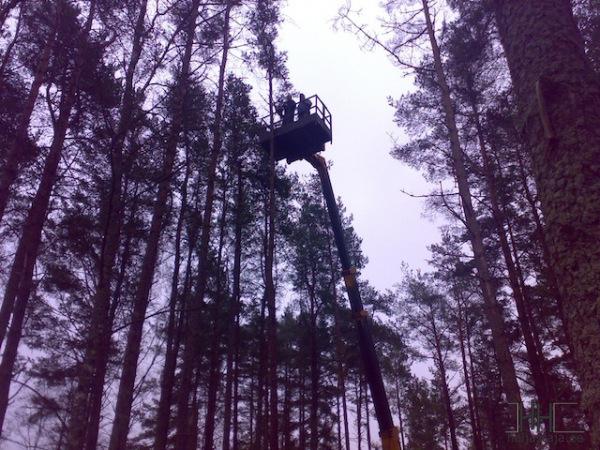 Puude-langetamine