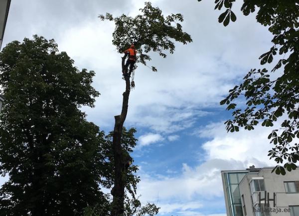 Puude-langetus